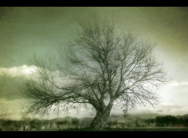 El árbol que está en el centro (2ª parte)